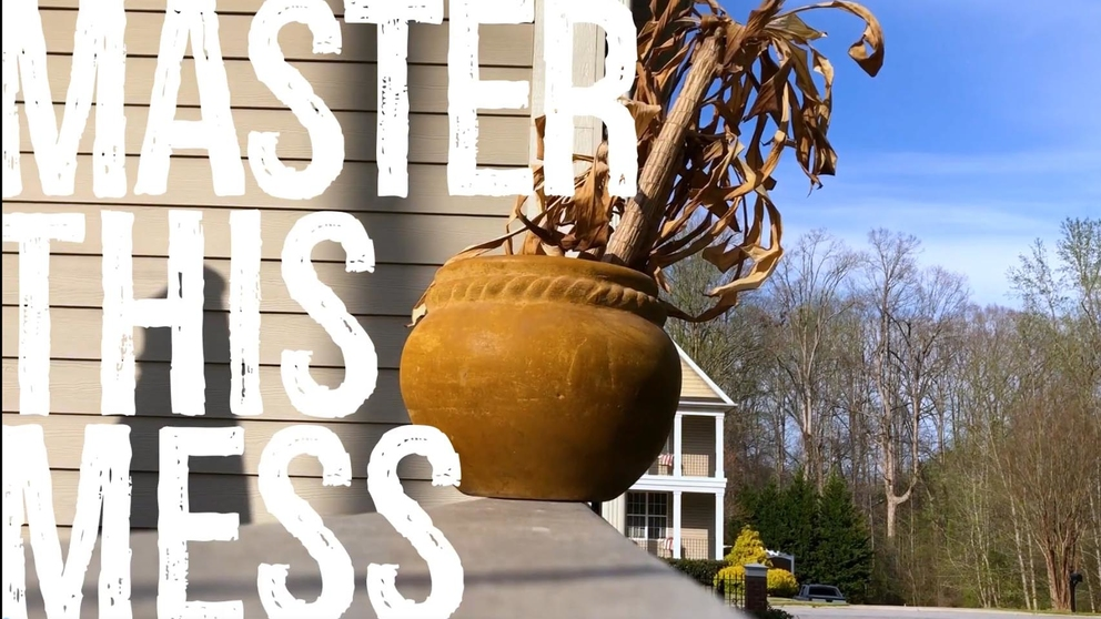 Master This Mess_ Potted Plant